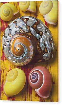 Six Snails Shells Wood Print by Garry Gay