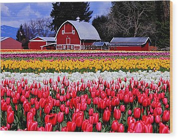 Skagit Valley Wood Print by Benjamin Yeager