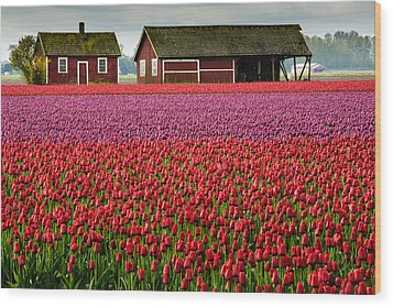 Skagit Valley Crops Wood Print