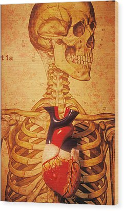 Skeleton And Heart Model Wood Print by Garry Gay