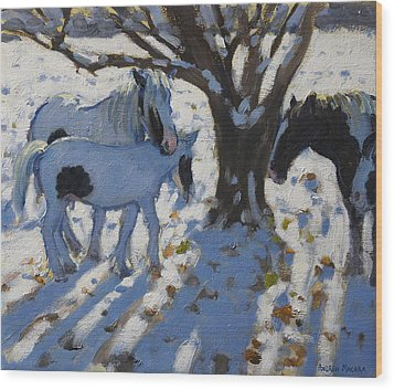 Skewbald Ponies In Winter Wood Print by Andrew Macara