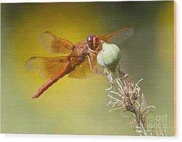 Skimmer Hanging Around Wood Print by Bryan Keil