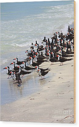 Skimmers On The Beach Wood Print by Carol Groenen