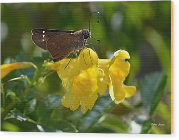 Wood Print featuring the photograph Skipper Butterfly 2 by Debra Martz