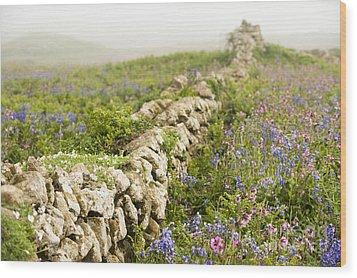 Skomer Wildflowers Wood Print by Anne Gilbert