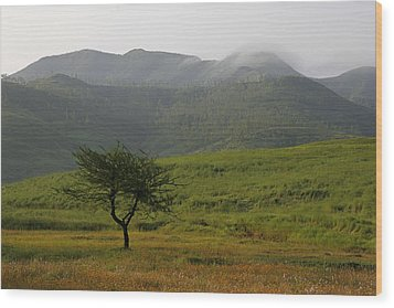 Skc 0053 A Solitary Tree Wood Print by Sunil Kapadia