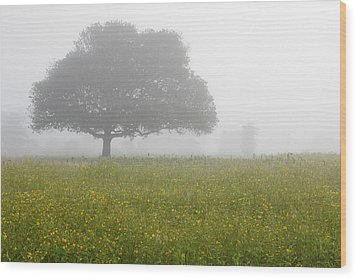 Skc 0056 Tree In Fog Wood Print by Sunil Kapadia