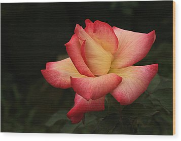Skc 0432 Blooming And Blossoming Wood Print by Sunil Kapadia