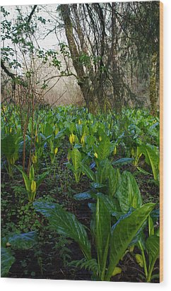 Wood Print featuring the photograph Skunk Cabbages by Adria Trail