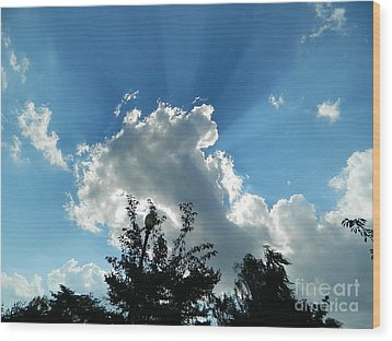 Wood Print featuring the photograph Sky Phenomenon At Hains Point by Emmy Marie Vickers