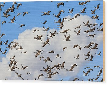 Skyful Of Cranes Wood Print by Beverly Parks