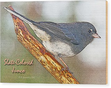 Wood Print featuring the photograph Slate-colored Junco Poster Image by A Gurmankin