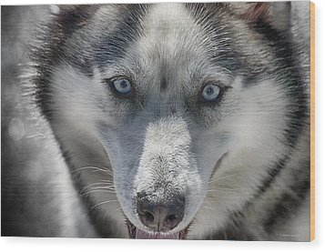 Wood Print featuring the photograph Sled Dog  by Dennis Baswell