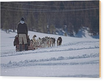 Sled Dog  Wood Print by Duncan Selby
