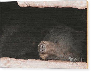 Sleeping Bear Wood Print by Nancy TeWinkel Lauren