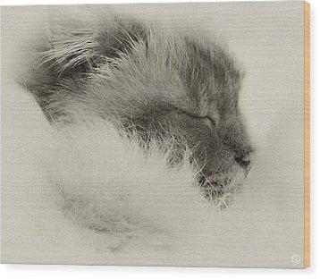 Sleeping Birma Wood Print by Gun Legler
