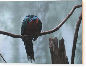 Sleeping Blue Bird Wood Print