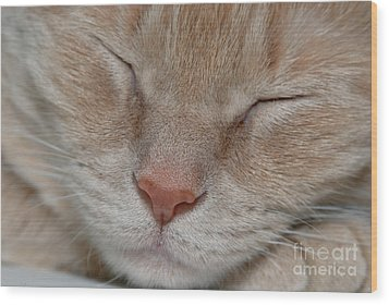 Sleeping Cat Face Closeup Wood Print by Amy Cicconi