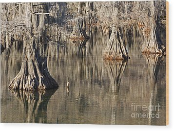 Sleeping Cypress Wood Print