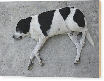 Sleeping Dog Lying On The Ground Wood Print by Matthias Hauser