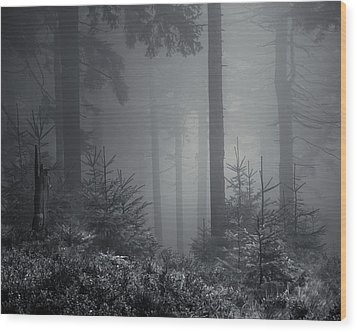 Sleeping Forest   Wood Print by Jaromir Hron