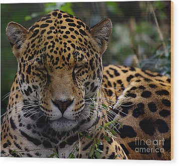 Sleeping Jaguar Wood Print