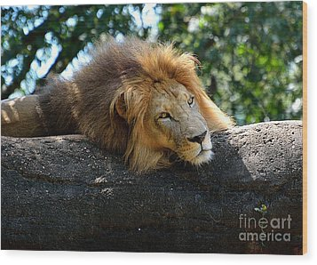 Wood Print featuring the photograph Thinking Lion by Lisa L Silva