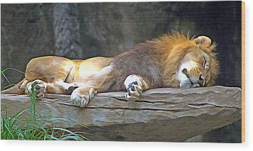 Sleeping Lion Wood Print by Marion Johnson