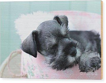 Sleeping Mini Schnauzer Wood Print by Stephanie Frey