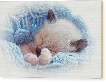 Wood Print featuring the photograph Sleeping Siamese Kitten by Tracie Kaska