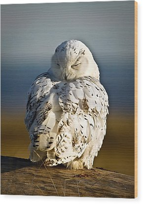 Sleeping Snowy Owl Wood Print by Steve McKinzie