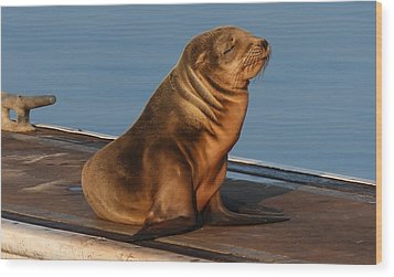 Wood Print featuring the photograph Sleeping Wild Sea Lion Pup  by Christy Pooschke
