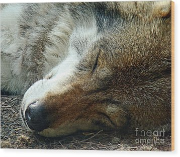 Sleeping Wolf Wood Print by Maja Sokolowska