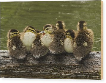 Sleepy Babies Wood Print by Mircea Costina Photography