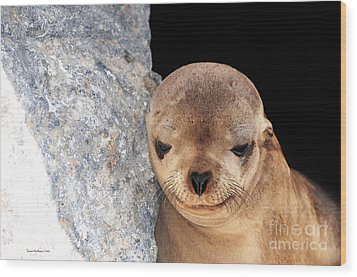 Sleepy Baby Sea Lion Wood Print by Susan Wiedmann