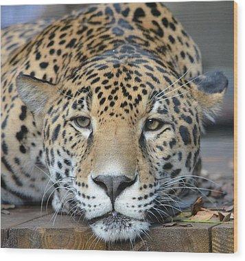 Sleepy Jaguar Wood Print