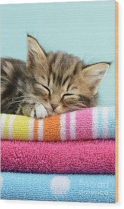 Sleepy Kitten Wood Print by Greg Cuddiford