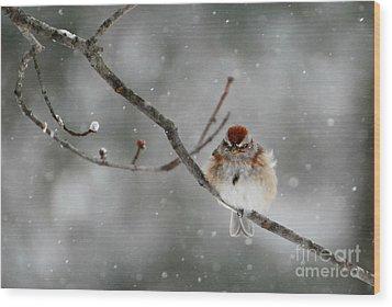 Sleepy Little Sparrow Wood Print by Lila Fisher-Wenzel