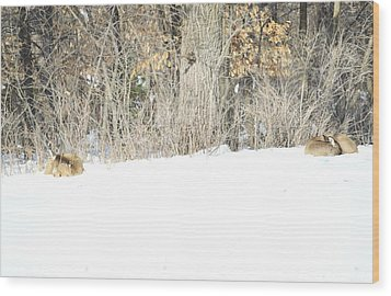 Wood Print featuring the photograph Sleepy Time by Dacia Doroff
