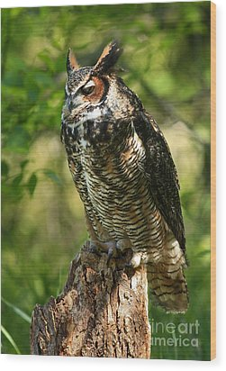 Sleepy Time In The Forest Great Horned Owl  Wood Print by Inspired Nature Photography Fine Art Photography