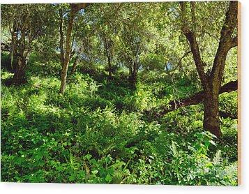 Sleepy Valley Oaks Wood Print by Gary Brandes