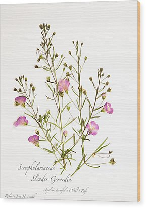 Slender Gerardia 3 Wood Print