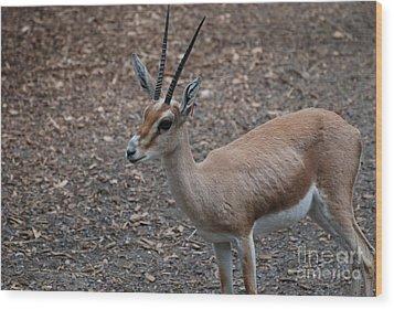 Slender Horned Gazelle Wood Print by DejaVu Designs
