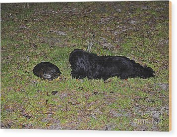 Slider And Shih-tzu Wood Print by Al Powell Photography USA
