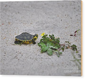 Slider And Sorrel In Sand Wood Print by Al Powell Photography USA