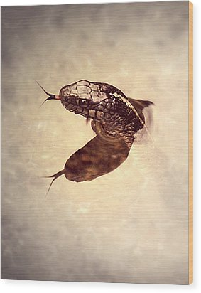 Wood Print featuring the photograph Slithering Reflections by Melanie Lankford Photography