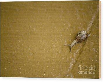 Slow But Steady Wood Print by Anne Rodkin