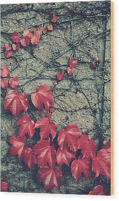 Slowly Dying Wood Print by Laurie Search
