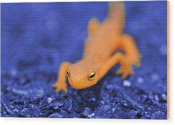 Sly Salamander Wood Print