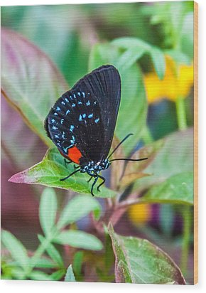 Small Black With Blue Spots Wood Print by Karen Stephenson